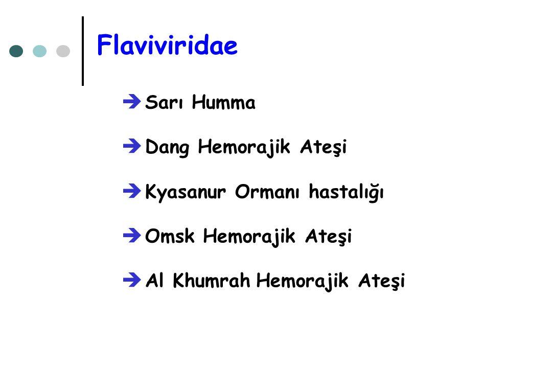Flaviviridae Sarı Humma Dang Hemorajik Ateşi Kyasanur Ormanı hastalığı