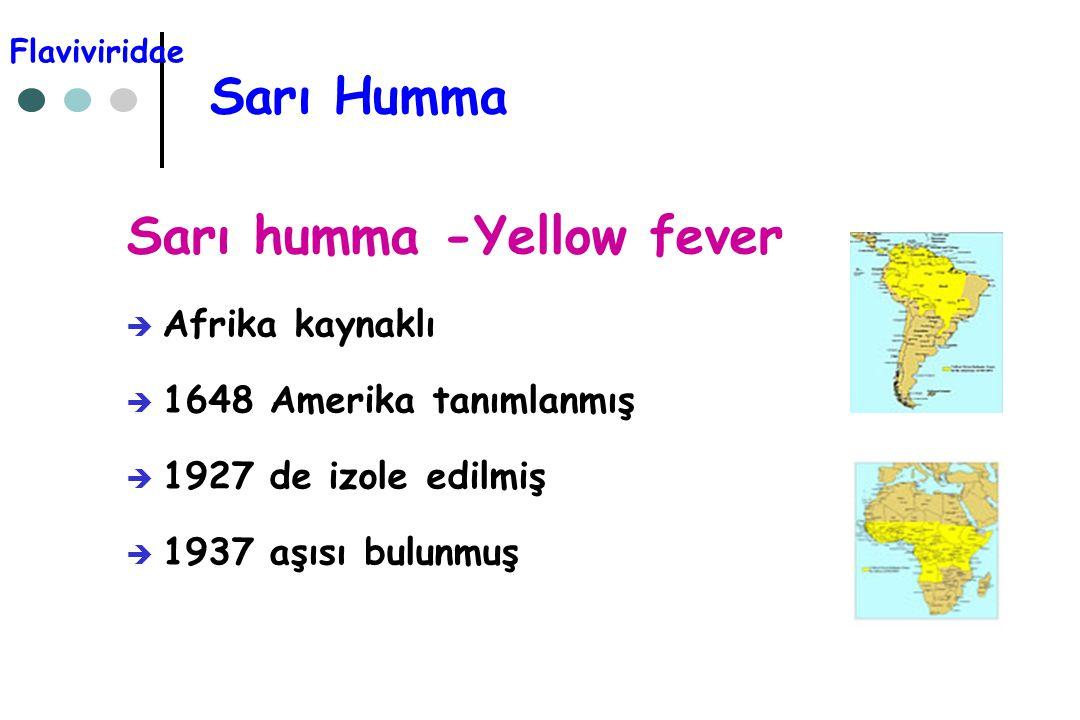 Sarı humma -Yellow fever