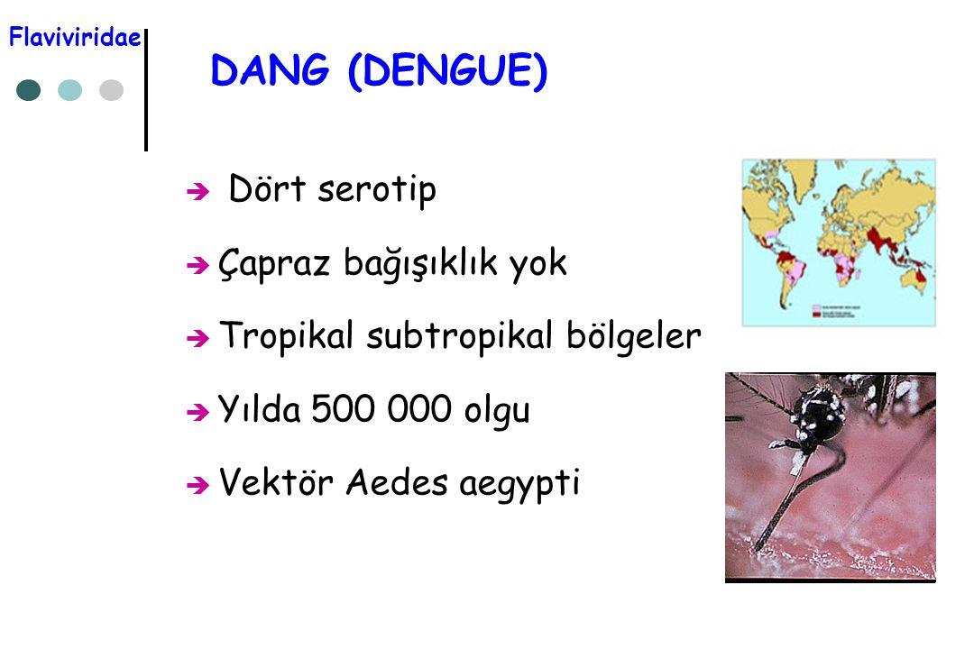 DANG (DENGUE) Dört serotip Çapraz bağışıklık yok