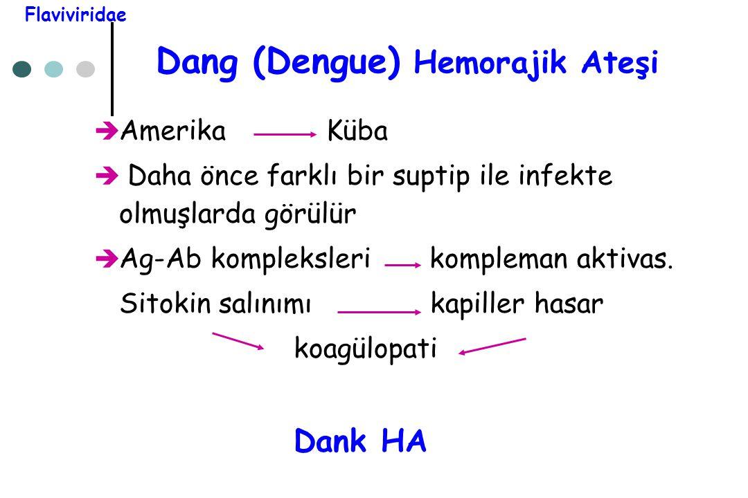 Dang (Dengue) Hemorajik Ateşi