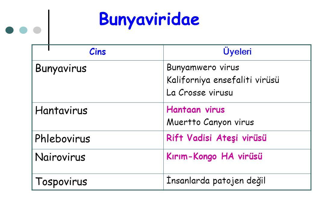 Bunyaviridae Bunyavirus Hantavirus Phlebovirus Nairovirus Tospovirus