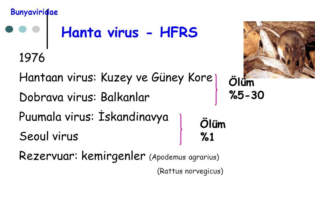 Hanta virus - HFRS 1976 Hantaan virus: Kuzey ve Güney Kore