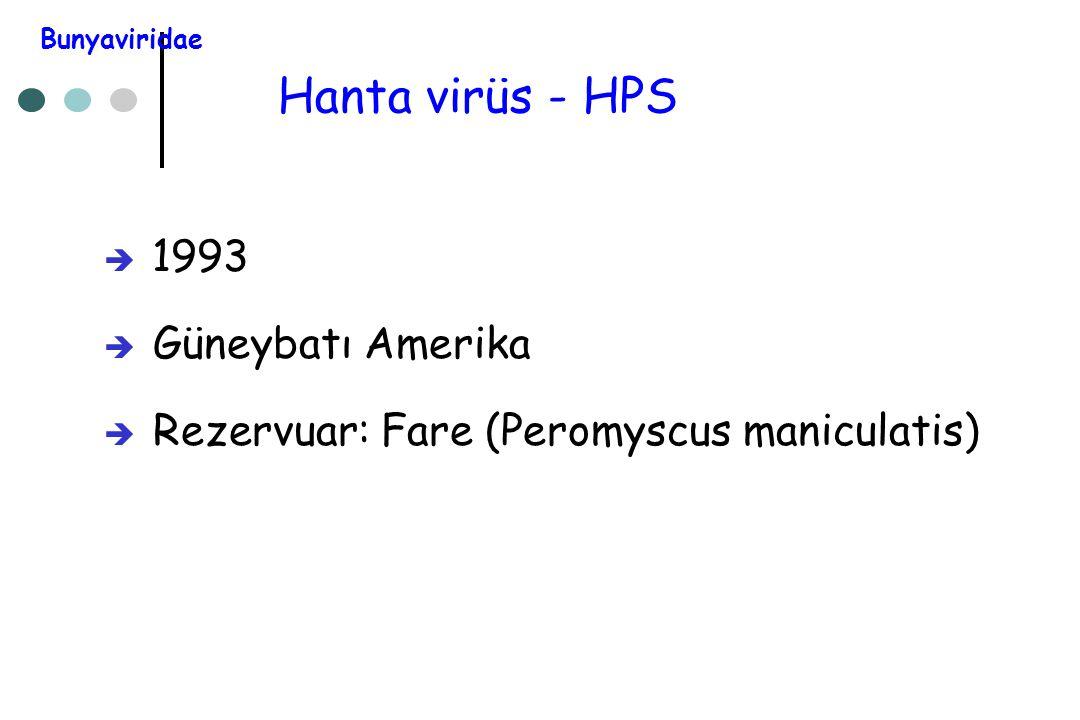 Hanta virüs - HPS 1993 Güneybatı Amerika