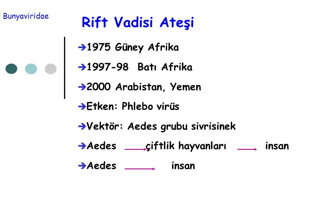 Rift Vadisi Ateşi 1975 Güney Afrika 1997-98 Batı Afrika