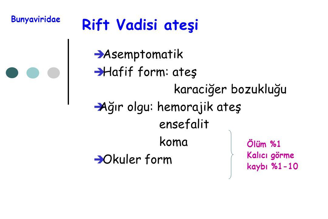 Rift Vadisi ateşi Asemptomatik Hafif form: ateş karaciğer bozukluğu