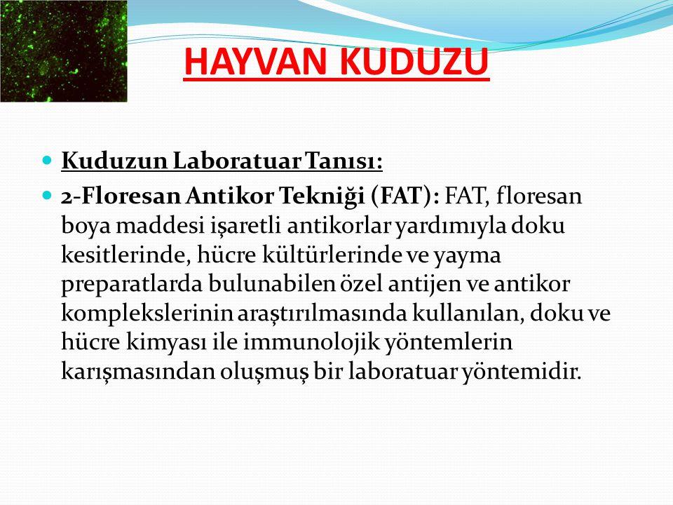 HAYVAN KUDUZU Kuduzun Laboratuar Tanısı: