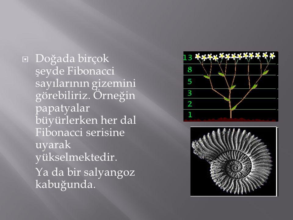 Doğada birçok şeyde Fibonacci sayılarının gizemini görebiliriz