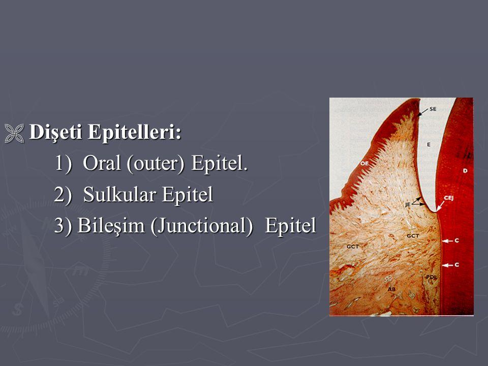 3) Bileşim (Junctional) Epitel