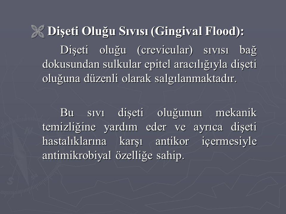  Dişeti Oluğu Sıvısı (Gingival Flood):