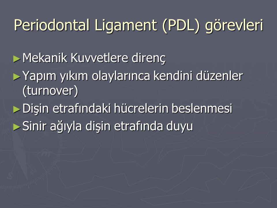Periodontal Ligament (PDL) görevleri