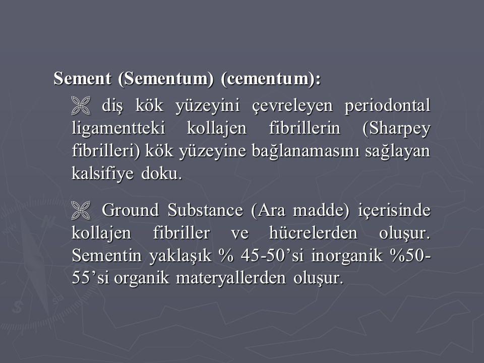 Sement (Sementum) (cementum):