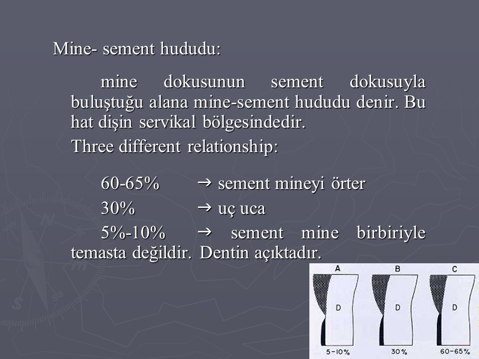 Mine- sement hududu: mine dokusunun sement dokusuyla buluştuğu alana mine-sement hududu denir. Bu hat dişin servikal bölgesindedir.