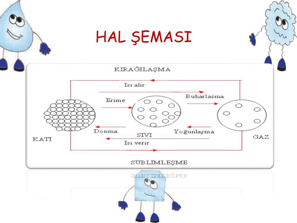 HAL ŞEMASI