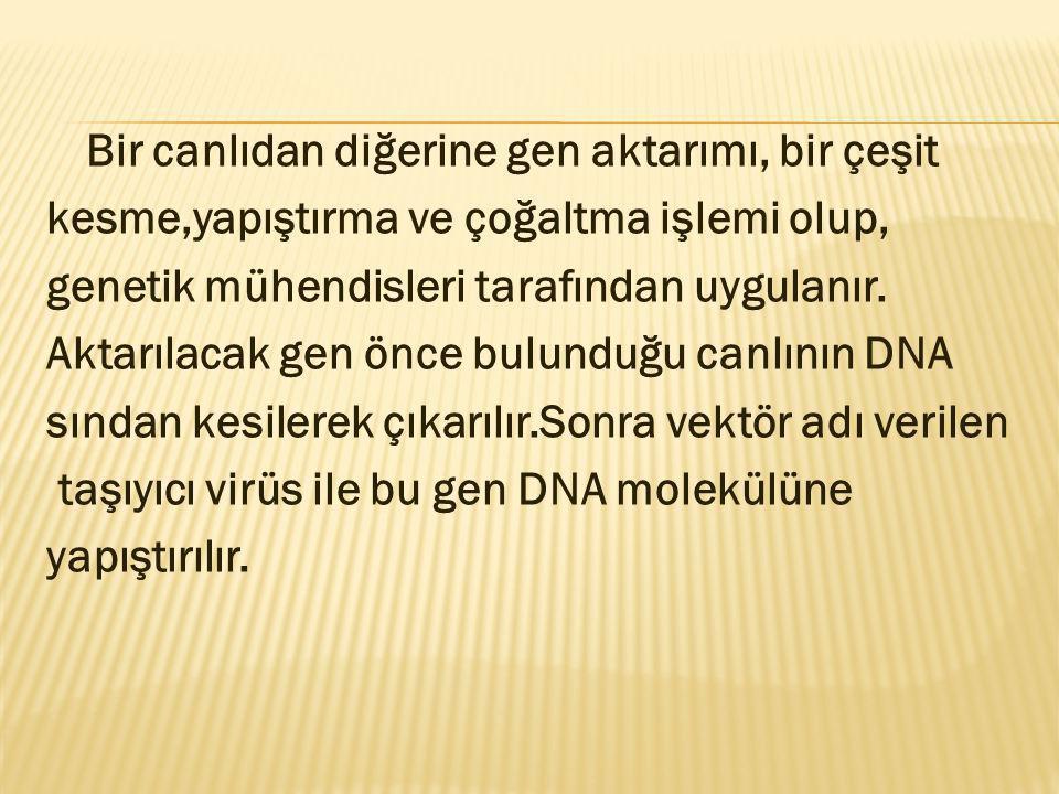 Bir canlıdan diğerine gen aktarımı, bir çeşit