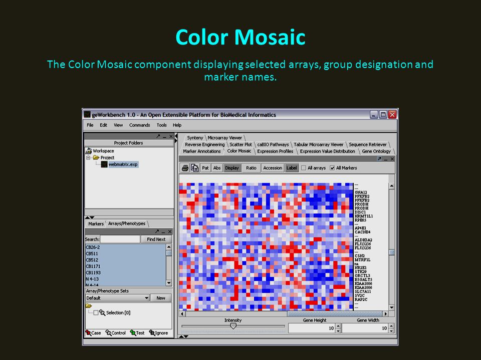 Color Mosaic The Color Mosaic component displaying selected arrays, group designation and marker names.