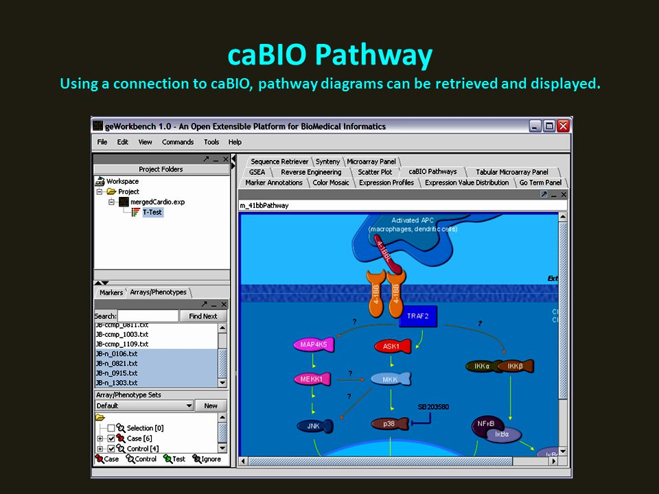 caBIO Pathway Using a connection to caBIO, pathway diagrams can be retrieved and displayed.