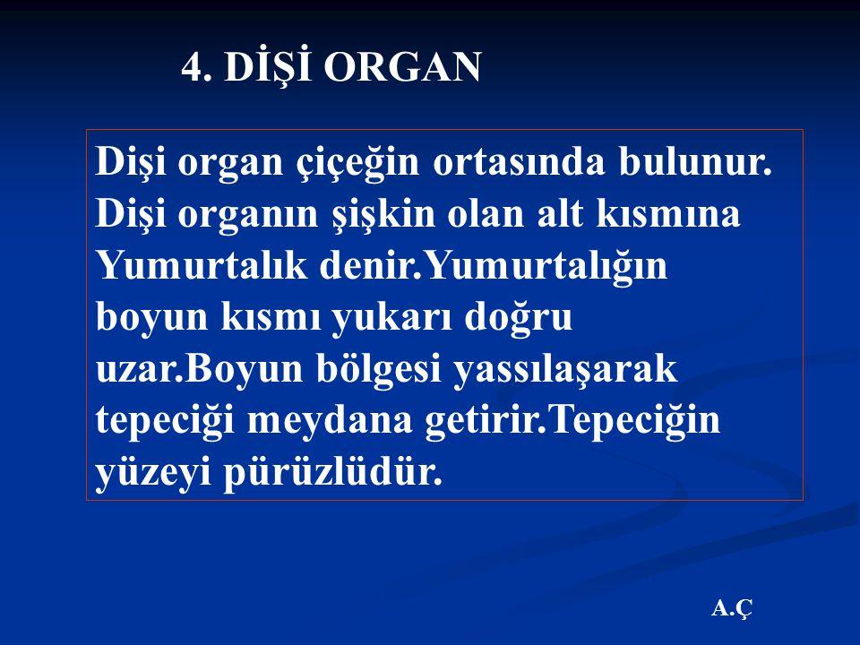 4. DİŞİ ORGAN