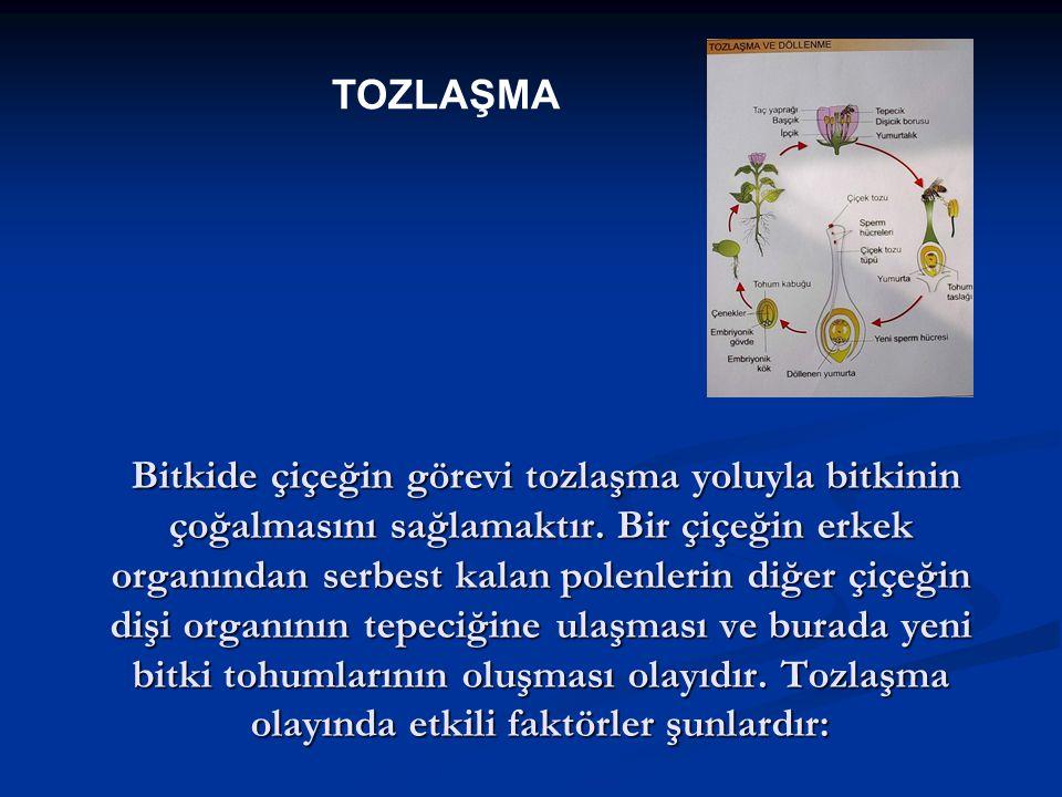 TOZLAŞMA