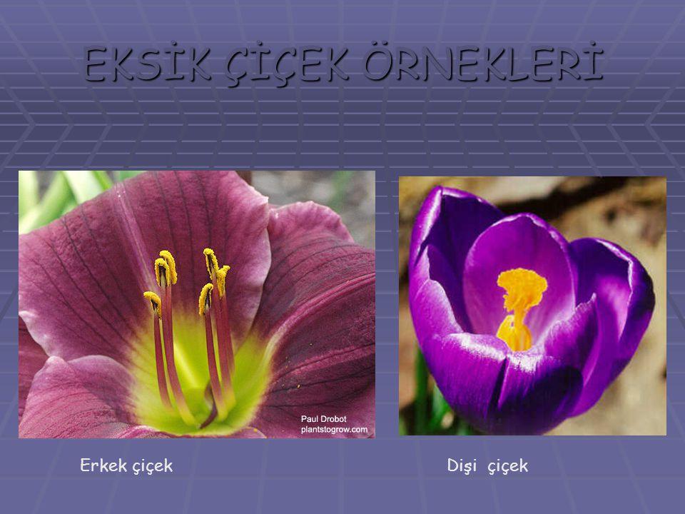 EKSİK ÇİÇEK ÖRNEKLERİ Erkek çiçek Dişi çiçek
