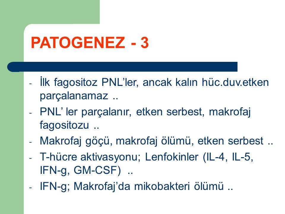 PATOGENEZ - 3 İlk fagositoz PNL'ler, ancak kalın hüc.duv.etken parçalanamaz .. PNL' ler parçalanır, etken serbest, makrofaj fagositozu ..
