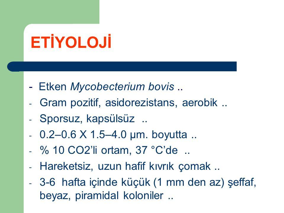 ETİYOLOJİ - Etken Mycobecterium bovis ..
