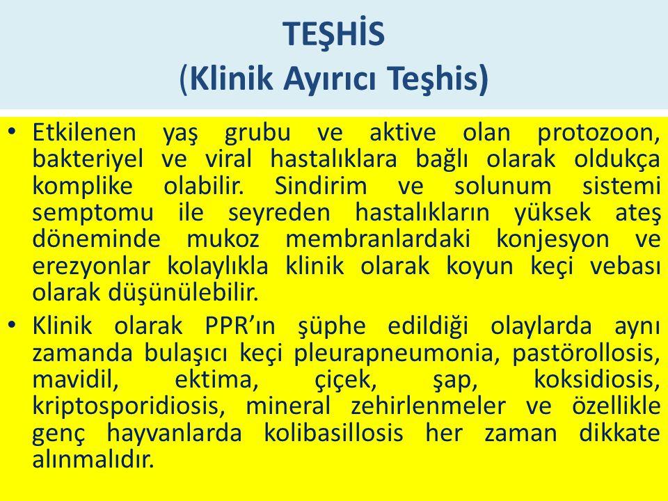 TEŞHİS (Klinik Ayırıcı Teşhis)