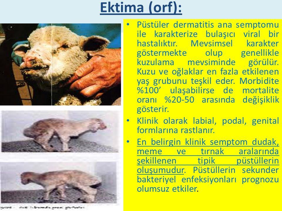 Ektima (orf):