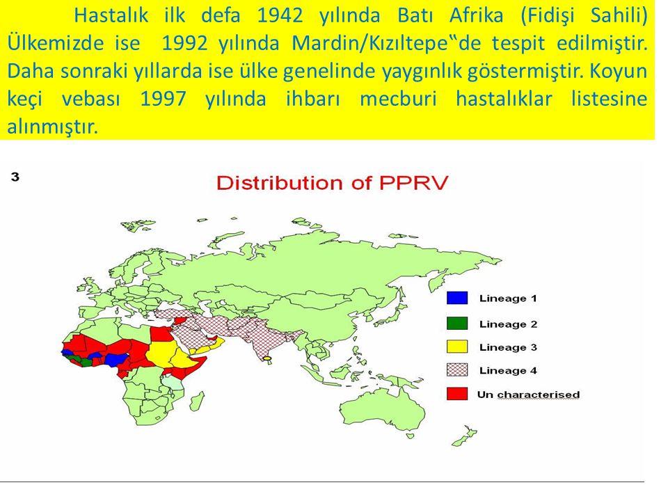 """Hastalık ilk defa 1942 yılında Batı Afrika (Fidişi Sahili) Ülkemizde ise 1992 yılında Mardin/Kızıltepe""""de tespit edilmiştir."""