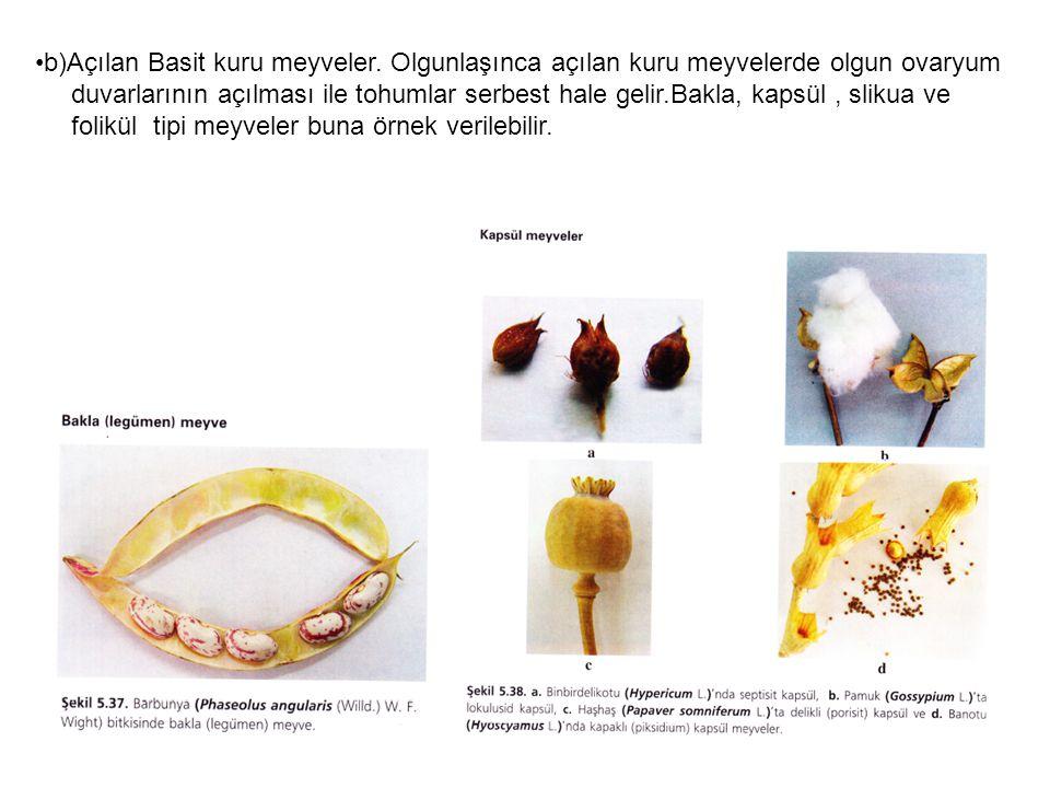 b)Açılan Basit kuru meyveler