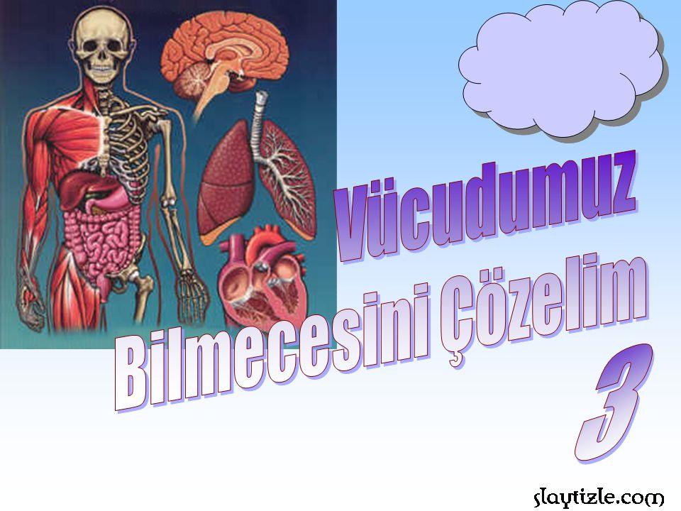 Vücudumuz Bilmecesini Çözelim 3