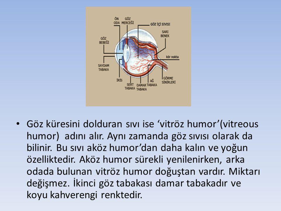 Göz küresini dolduran sıvı ise 'vitröz humor'(vitreous humor) adını alır.