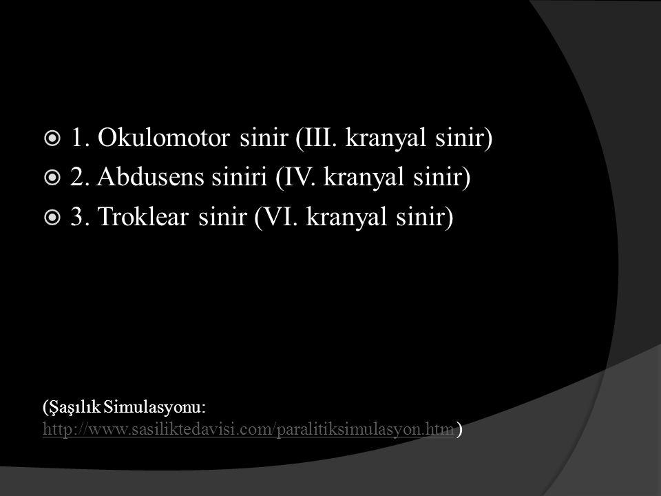 1. Okulomotor sinir (III. kranyal sinir)