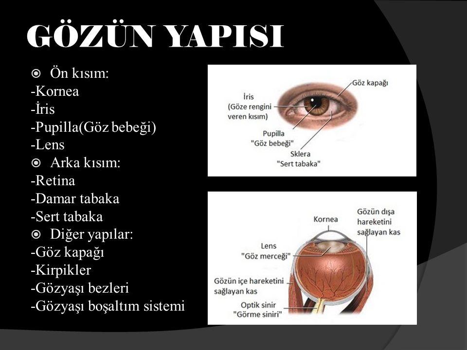 GÖZÜN YAPISI Ön kısım: -Kornea -İris -Pupilla(Göz bebeği) -Lens