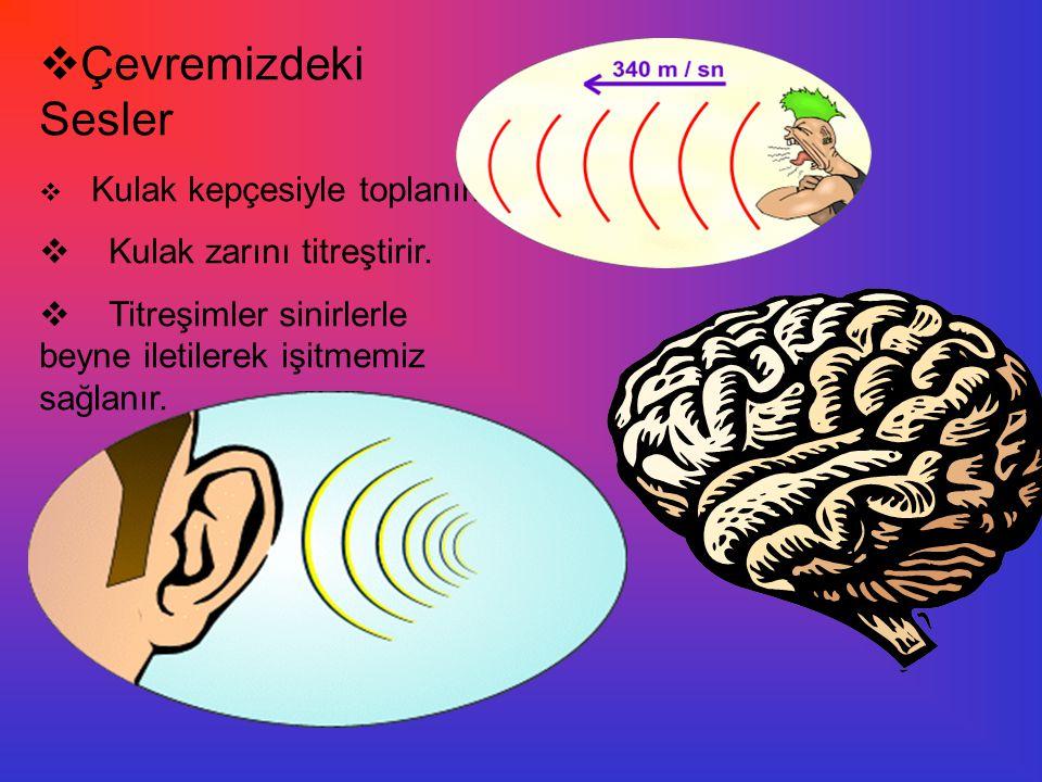 Çevremizdeki Sesler Kulak zarını titreştirir.