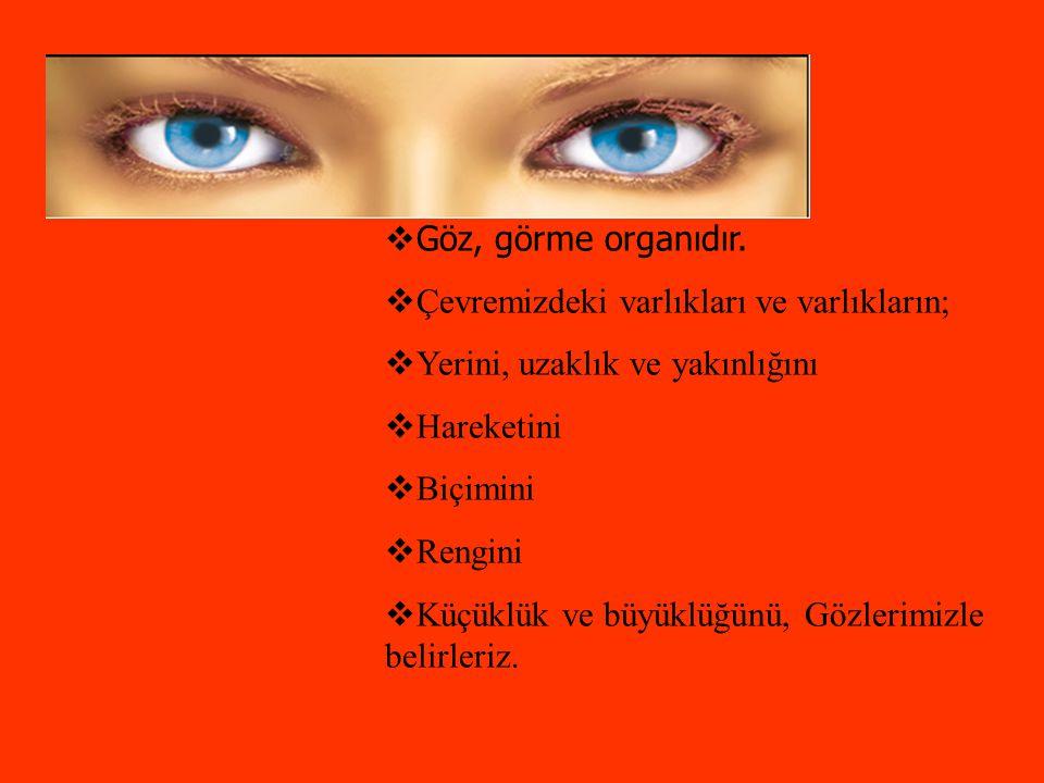 Göz, görme organıdır. Çevremizdeki varlıkları ve varlıkların; Yerini, uzaklık ve yakınlığını. Hareketini.