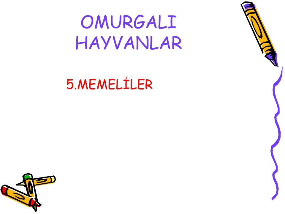 OMURGALI HAYVANLAR 5.MEMELİLER