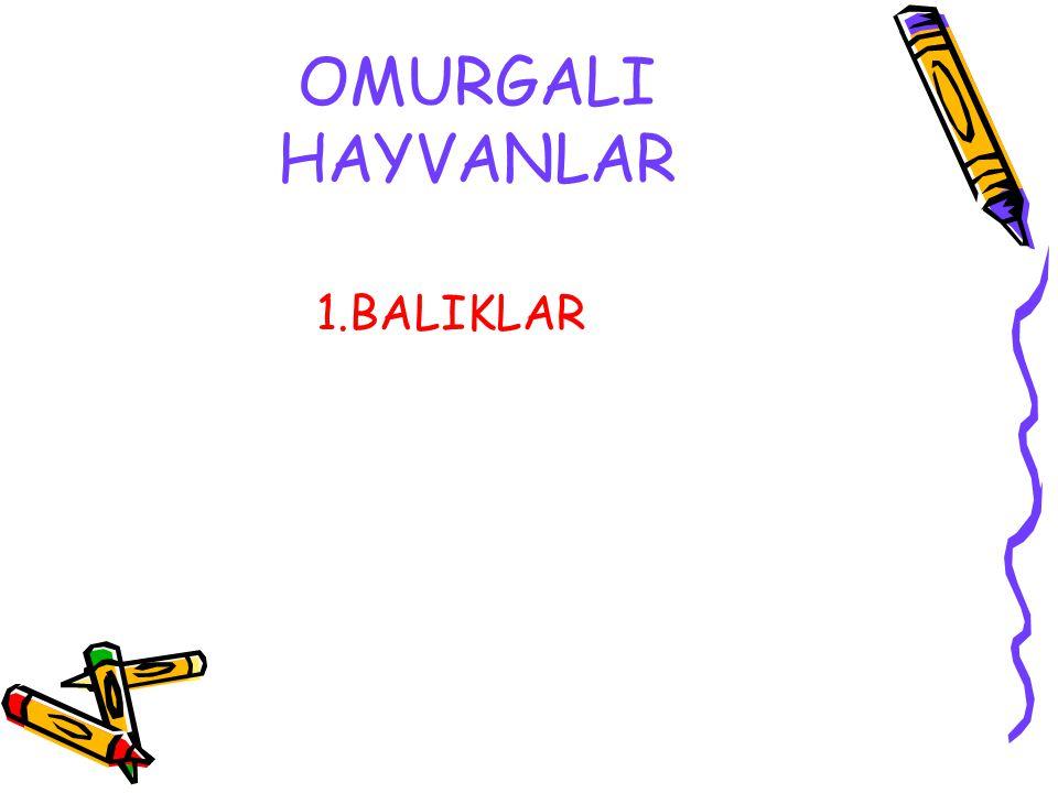 OMURGALI HAYVANLAR 1.BALIKLAR