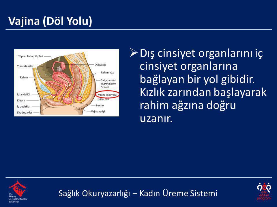 Vajina (Döl Yolu) Dış cinsiyet organlarını iç cinsiyet organlarına bağlayan bir yol gibidir. Kızlık zarından başlayarak rahim ağzına doğru uzanır.