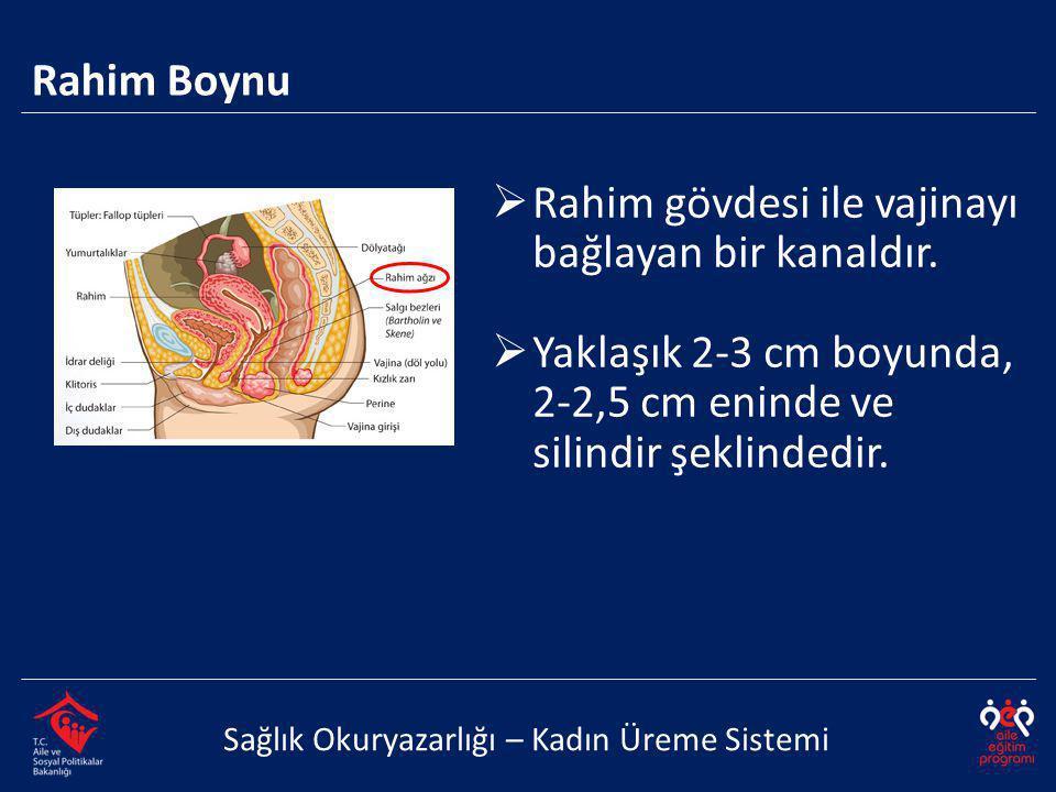 Rahim gövdesi ile vajinayı bağlayan bir kanaldır.