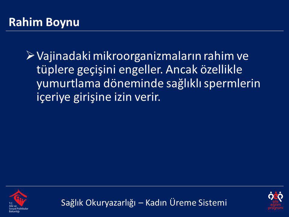 Rahim Boynu