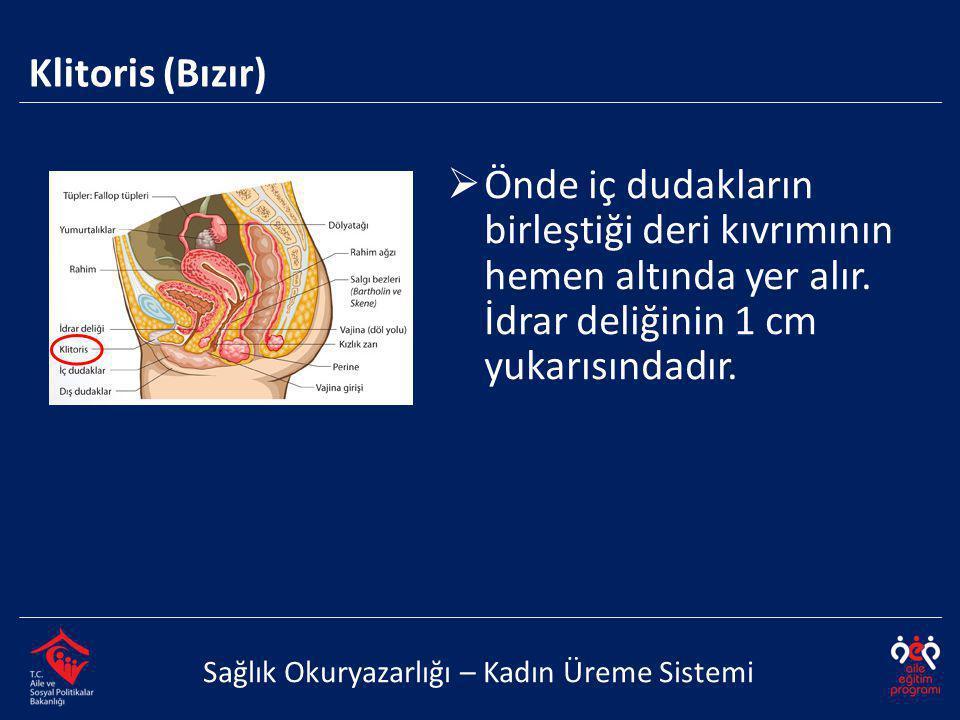 Klitoris (Bızır) Önde iç dudakların birleştiği deri kıvrımının hemen altında yer alır. İdrar deliğinin 1 cm yukarısındadır.