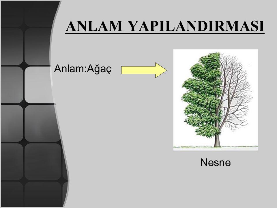 ANLAM YAPILANDIRMASI Anlam:Ağaç Nesne