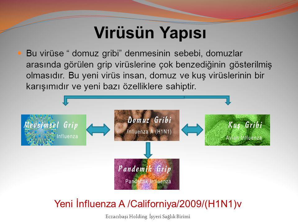 Virüsün Yapısı Yeni İnfluenza A /Californiya/2009/(H1N1)v