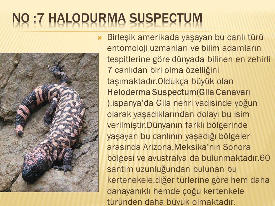 No :7 Halodurma Suspectum