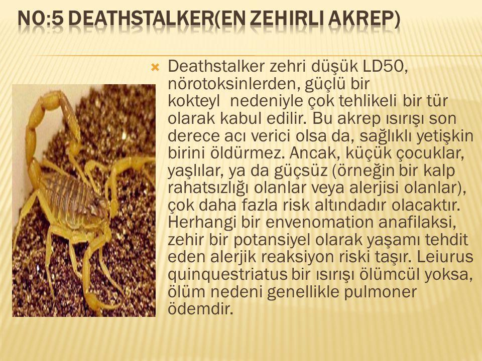 No:5 Deathstalker(En zehirli Akrep)