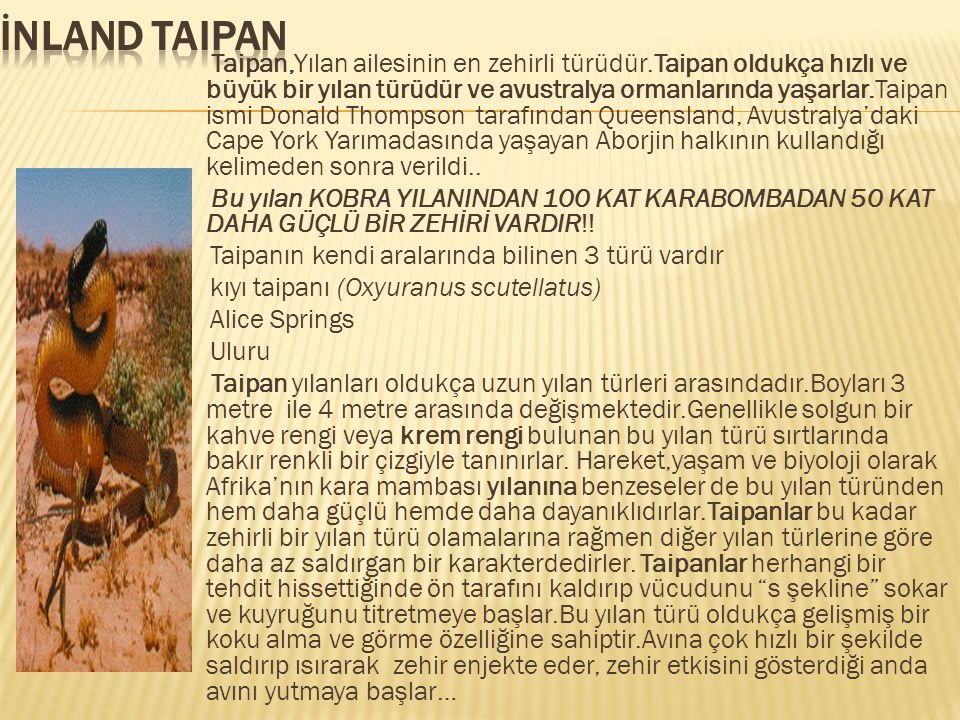 No: 4İnland Taipan