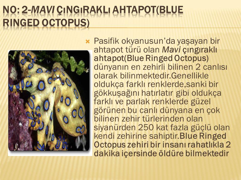 No: 2-Mavi çıngıraklı ahtapot(Blue Ringed Octopus)