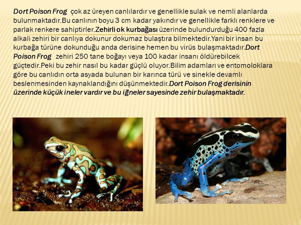 Dort Poison Frog çok az üreyen canlılardır ve genellikle sulak ve nemli alanlarda bulunmaktadır.Bu canlının boyu 3 cm kadar yakındır ve genellikle farklı renklere ve parlak renkere sahiptirler.Zehirli ok kurbağası üzerinde bulundurduğu 400 fazla alkali zehiri bir canlıya dokunur dokumaz bulaştıra bilmektedir.Yani bir insan bu kurbağa türüne dokunduğu anda derisine hemen bu virüs bulaşmaktadır.Dort Poison Frog zehiri 250 tane boğayı veya 100 kadar insanı öldürebilcek güçtedir.Peki bu zehir nasıl bu kadar güçlü oluyor.Bilim adamları ve entomoloklara göre bu canlıdın orta asyada bulunan bir karınca türü ve sinekle devamlı beslenmesinden kaynaklandığını düşünmektedir.Dort Poison Frog derisinin üzerinde küçük ineler vardır ve bu iğneler sayesinde zehir bulaşmaktadır.