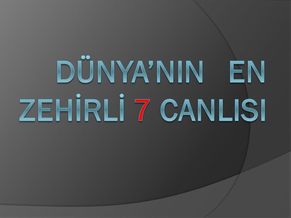 DÜNYA'NIN EN ZEHİRLİ 7 CANLISI