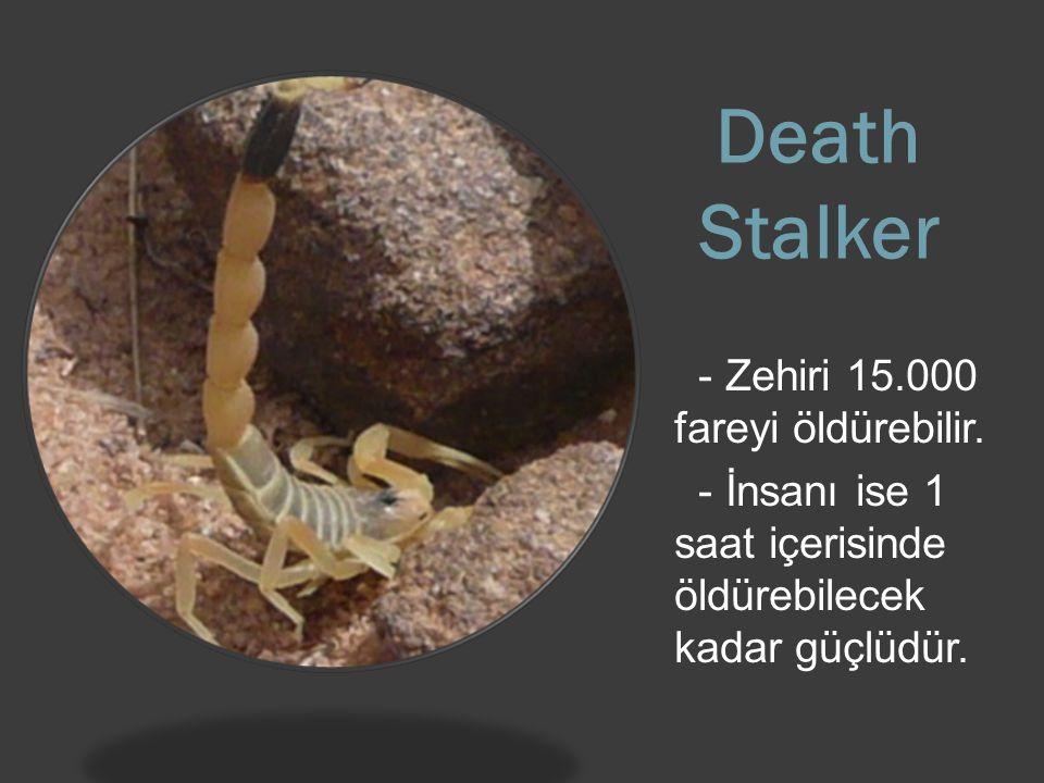 Death Stalker - Zehiri 15.000 fareyi öldürebilir.